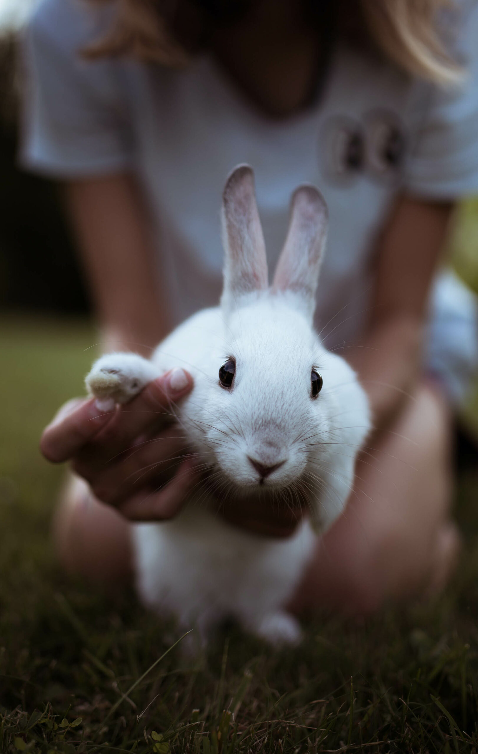 Girl holding her rabbit in front of camera from Freejpg
